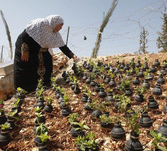20140602 212041 76841001 ชาวปาเลสไตน์ในเขต West Bank สร้างสวนที่เป็นอนุสรณ์จากปลอกกระสุนแก๊สน้ำตา