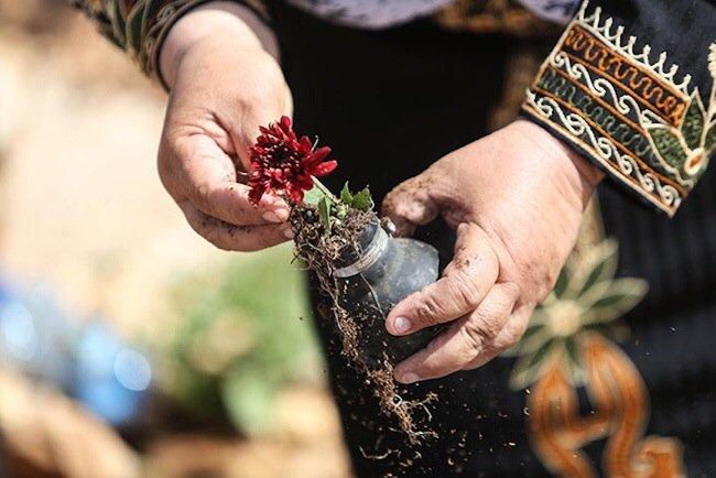 20140602 212041 76841151 ชาวปาเลสไตน์ในเขต West Bank สร้างสวนที่เป็นอนุสรณ์จากปลอกกระสุนแก๊สน้ำตา