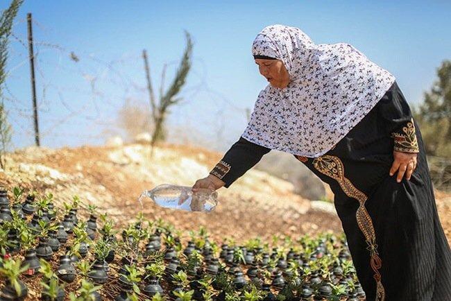 20140602 212041 76841482 ชาวปาเลสไตน์ในเขต West Bank สร้างสวนที่เป็นอนุสรณ์จากปลอกกระสุนแก๊สน้ำตา