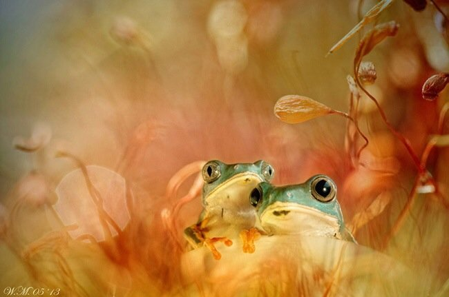 ภาพถ่าย Macro โลกของกบ สวยงาม ชวนฝัน เกินบรรยาย 16 - macro picture