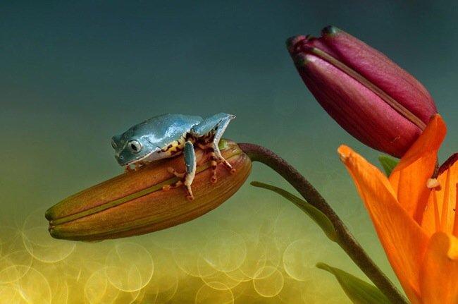ภาพถ่าย Macro โลกของกบ สวยงาม ชวนฝัน เกินบรรยาย 19 - macro picture