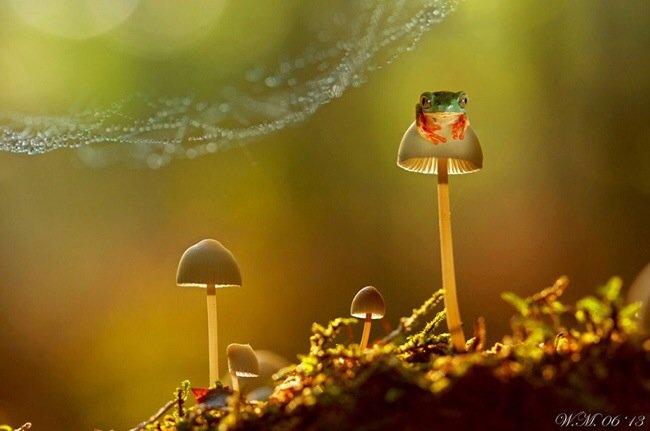 ภาพถ่าย Macro โลกของกบ สวยงาม ชวนฝัน เกินบรรยาย 17 - macro picture