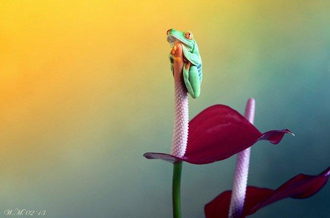 ภาพถ่าย Macro โลกของกบ สวยงาม ชวนฝัน เกินบรรยาย 18 - macro picture