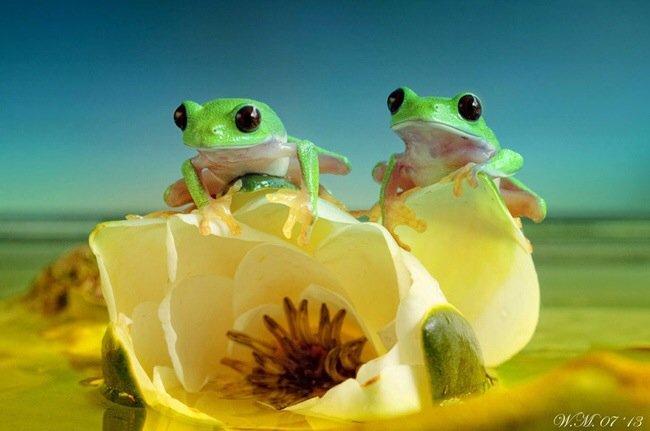 20140621 090321 32601802 650x431 ภาพถ่าย Macro โลกของกบ สวยงาม ชวนฝัน เกินบรรยาย