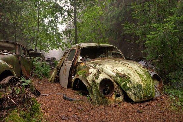 20140724 122333 44613553 การจราจรติดขัดในป่าที่เบลเยียมเป็นเวลา กว่า 70 ปี