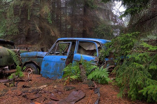 20140724 122333 44613890 การจราจรติดขัดในป่าที่เบลเยียมเป็นเวลา กว่า 70 ปี