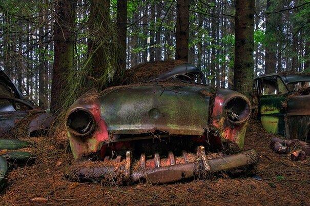 20140724 122334 44614005 การจราจรติดขัดในป่าที่เบลเยียมเป็นเวลา กว่า 70 ปี