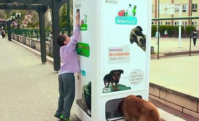 หยอดขวดพลาสติกใช้แล้วในตู้ Vending Machine ให้อาหารและน้ำกับสุนัขจรจัด 26 - หมา