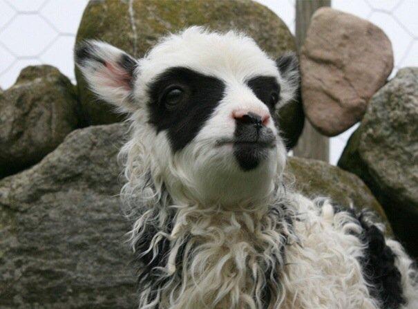 20140730 095650 35810308 สัตว์ที่โด่งดังในโลกออนไลน์ เพราะลวดลายแปลกๆ
