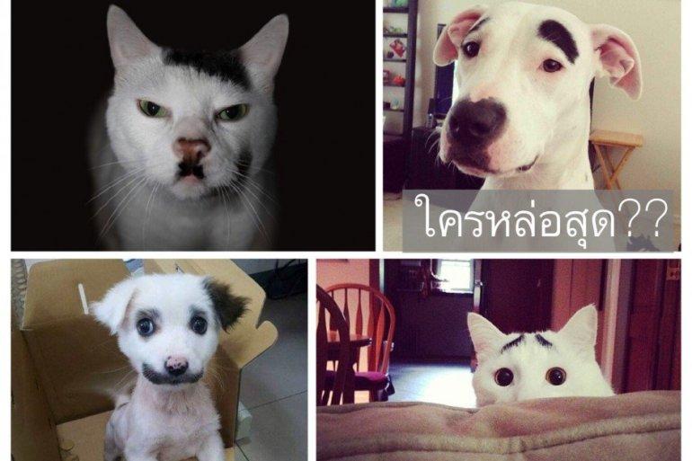 สัตว์ที่โด่งดังในโลกออนไลน์ เพราะลวดลายแปลกๆ 25 - หมา