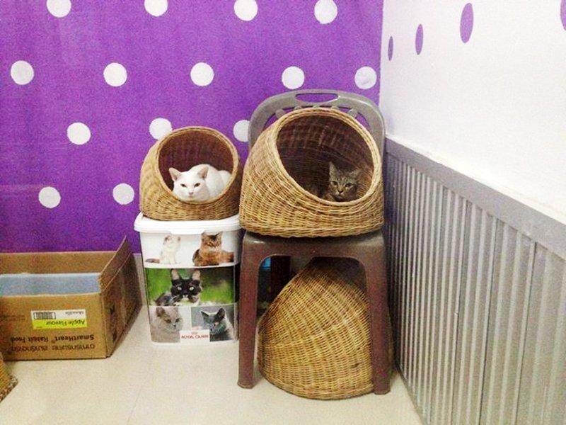 1014006 686414618061333 323716117687121761 n Cat Care Shop โรงแรมแมวเหมียว