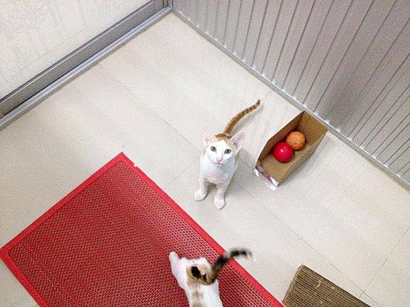 10178047 669292499773545 7417071436390387362 n Cat Care Shop โรงแรมแมวเหมียว