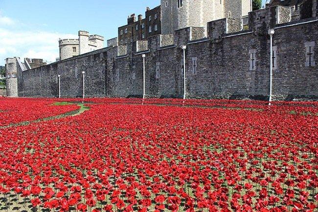 20140804 211502 76502688 Installation Art ..ดอกป๊อปปี้ไหลนองเพื่อรำลึกถึงผู้เสียชีวิตในสงครามโลกครั้งที่1