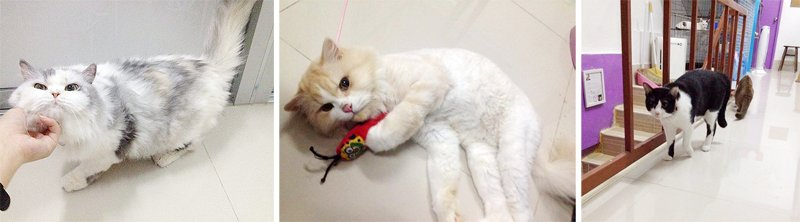 C51 Cat Care Shop โรงแรมแมวเหมียว