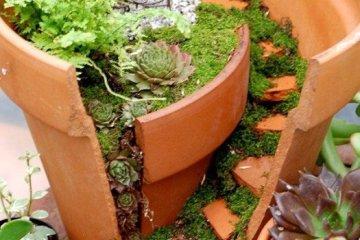 Reuse กระถางแตก เป็นสวนในจินตนาการ