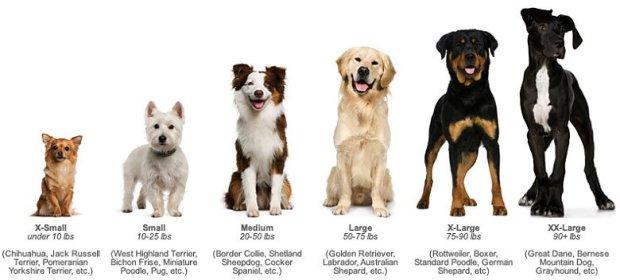 dogsize 650x294 หมาสุดดีใจ เจ้านายกลับจากหน้าที่ทหาร ชื่นใจไม่แพ้คนในครอบครัว