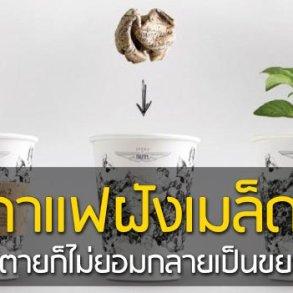ถ้วยกาแฟรักโลก รีไซเคิลขยะเป็นกระถางต้นไม้จากเมล็ดพืชฝังอยู่ 16 - กระถางต้นไม้
