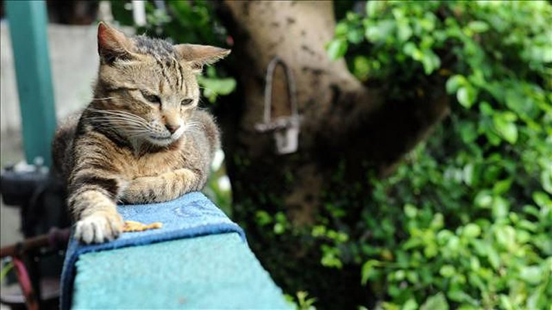 299111-Village-Where-Cats-Rule