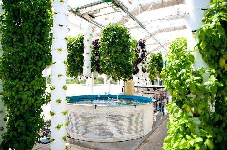 IMG 6711 สวนเกษตรบนหลังคาตึก ปลูกผักด้วยระบบ hydroponics ช่วยบำบัดน้ำเสียในบ่อเลี้ยงปลา