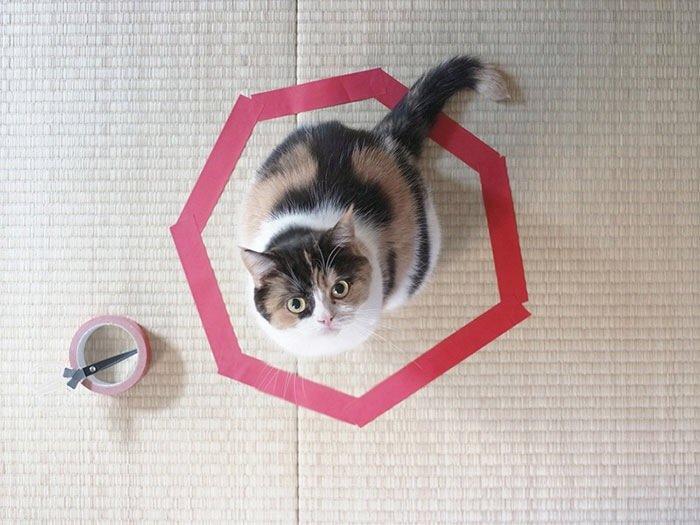 IMG 6813 วิธีล่อแมวมาติดกับดัก ทำเองก็ได้ ง่ายๆ 3 ขั้นตอน