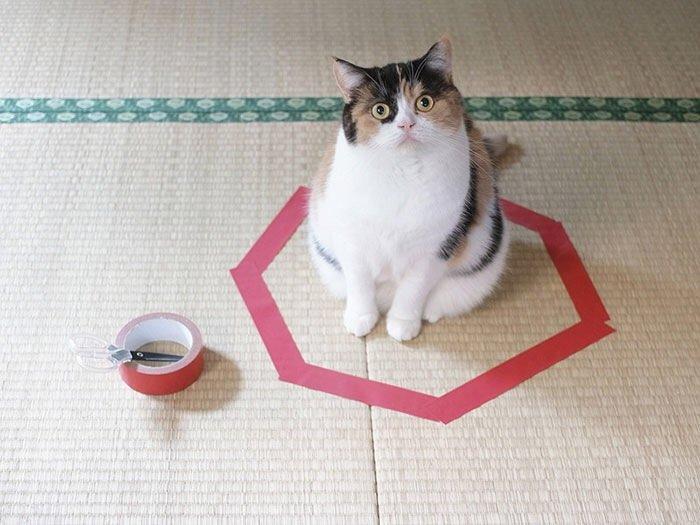 IMG 6814 วิธีล่อแมวมาติดกับดัก ทำเองก็ได้ ง่ายๆ 3 ขั้นตอน
