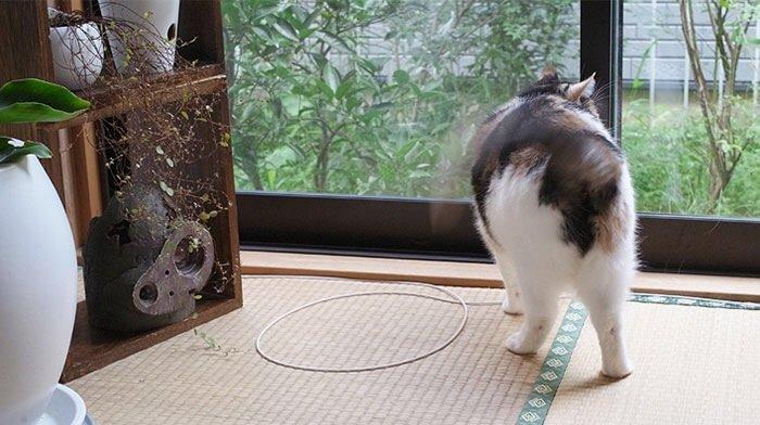 IMG 6816 วิธีล่อแมวมาติดกับดัก ทำเองก็ได้ ง่ายๆ 3 ขั้นตอน