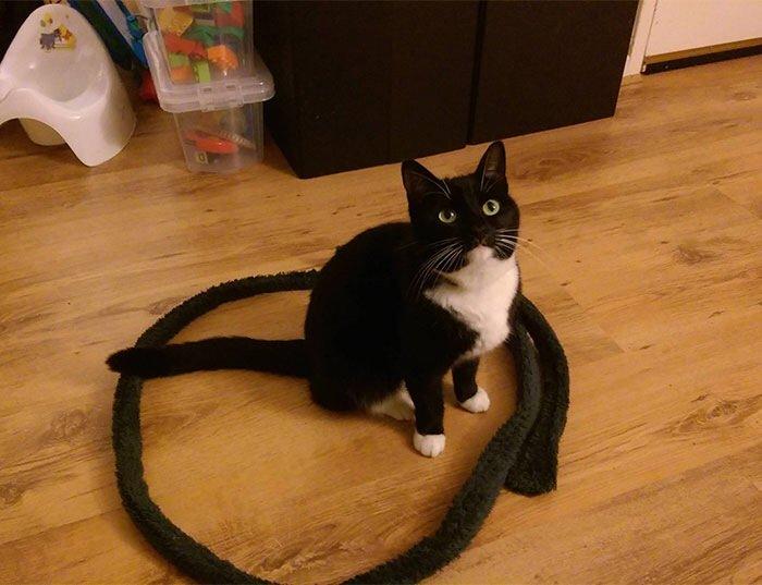 IMG 6821 วิธีล่อแมวมาติดกับดัก ทำเองก็ได้ ง่ายๆ 3 ขั้นตอน