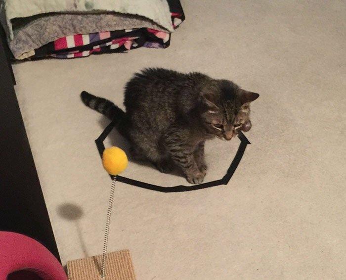 IMG 6823 วิธีล่อแมวมาติดกับดัก ทำเองก็ได้ ง่ายๆ 3 ขั้นตอน