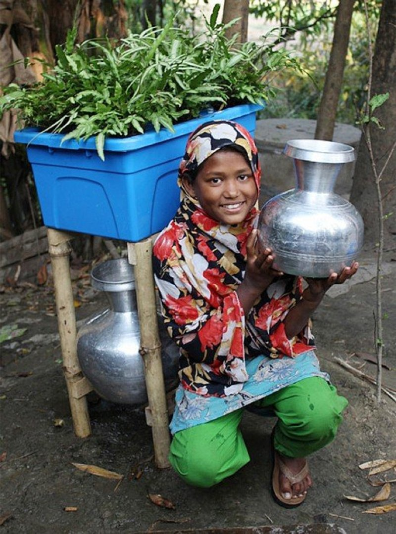 dezeen Plant based water purifying system named Idea that will change the world 1 ระบบกรองน้ำแบบธรรมชาติบำบัด