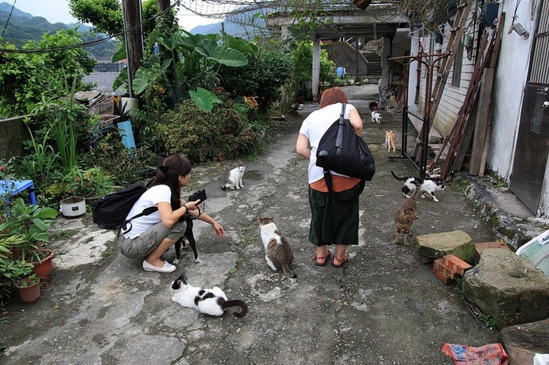 houtong-cats-24[6]