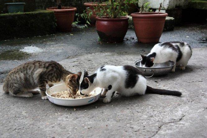 houtong-cats-25[2]