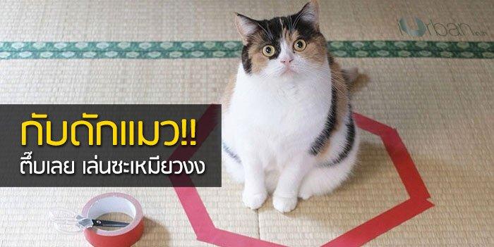 วิธีล่อแมวมาติดกับดัก ทำเองก็ได้ ง่ายๆ 3 ขั้นตอน 24 - แมว