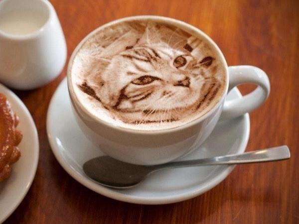 IMG 7088 Latte Art ภาพแมวบนฟองนม.. ฝีมือขั้นเทพ! ... แต่แหม ใครสังเกตดีๆ มาจับผิดกัน