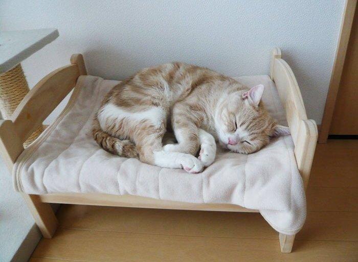 เตียงแมว.. จากเตียงตุ๊กตา IKEA  21 - แมว