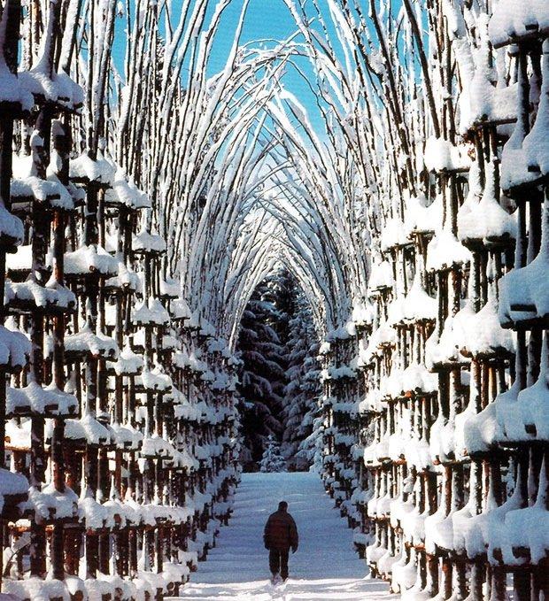 """""""โบสถ์ต้นไม้""""..ตัวอย่างงาน""""natural architecture""""ที่น่าประทับใจที่สุดในโลกชิ้นหนึ่ง 13 - Architecture"""