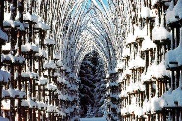 """""""โบสถ์ต้นไม้""""..ตัวอย่างงาน""""natural architecture""""ที่น่าประทับใจที่สุดในโลกชิ้นหนึ่ง  14 - ธรรมชาติ"""