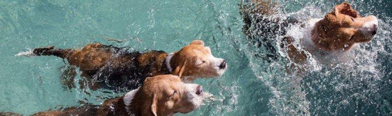 น้องหมามีที่เที่ยวอีกแล้วโฮ่ง! The Barkyard Bangkok โรงแรม ว่ายน้ำ ตัดสูท กรูมมิ่ง ช้อปปิ้ง โฮ่งๆ!! 13 - Community Centre
