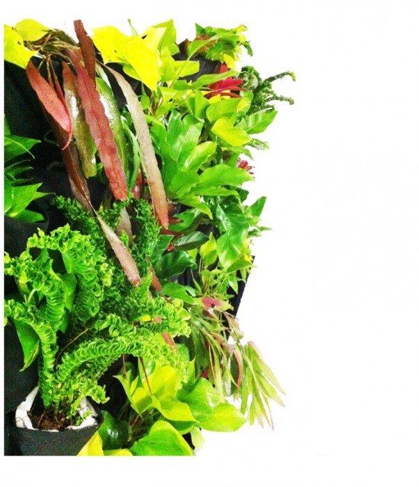 DIY KIT ทำสวนแนวตั้ง ได้ง่ายๆ ด้วยตัวเอง 14 - Garden