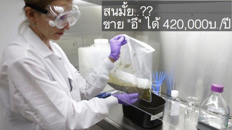 การรักษาโรคแบบMicrobiome ทำให้คนสุขภาพดี มีรายได้เสริมจาก อึ! 420,000บ./ปี 13 - bacteria
