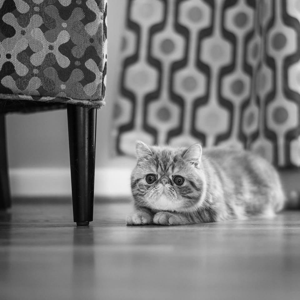 พลาดไม่ได้..คลิปฉาวแมวพลอดรัก ปลุกปล้ำกันน่ารักผุด..ผุด.. 22 - Garfield