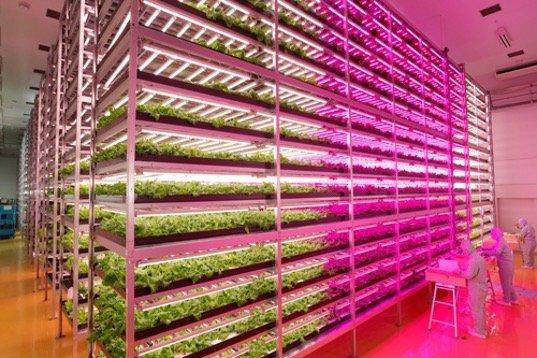 สวนผักภายในอาคารที่ใหญ่ที่สุดในโลก ปลูกผักกาดได้วันละ10,000หัว 7 - Farm