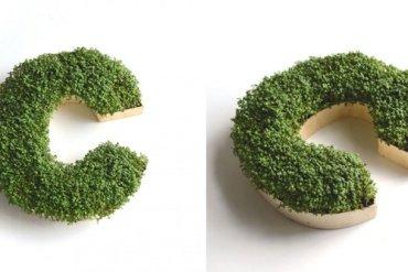 DIY : ปลูกต้นไม้ให้เป็นตัวอักษร 15 - ตัวอักษร