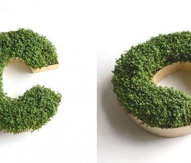 DIY : ปลูกต้นไม้ให้เป็นตัวอักษร 15 - Monogram