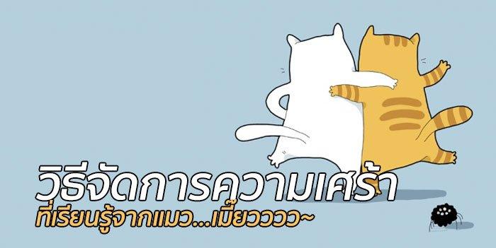 เรียนรู้วิธีจัดการความเศร้าจากแมว! 18 - แมว