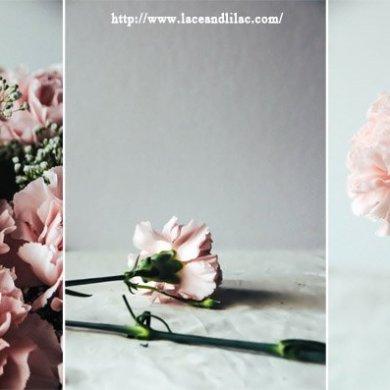 ดอกคาร์เนชั่นมอบให้ในวันแม่...สื่อถึงความรักที่มีต่อแม่ 16 - flora