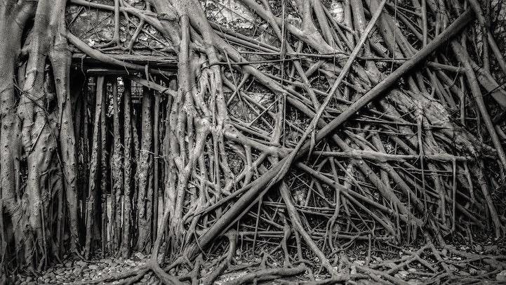 เมื่อธรรมชาติทวงคืนพื้นที่..คือการทำลายหรืองานสร้างสรรค์ 18 - abandon building