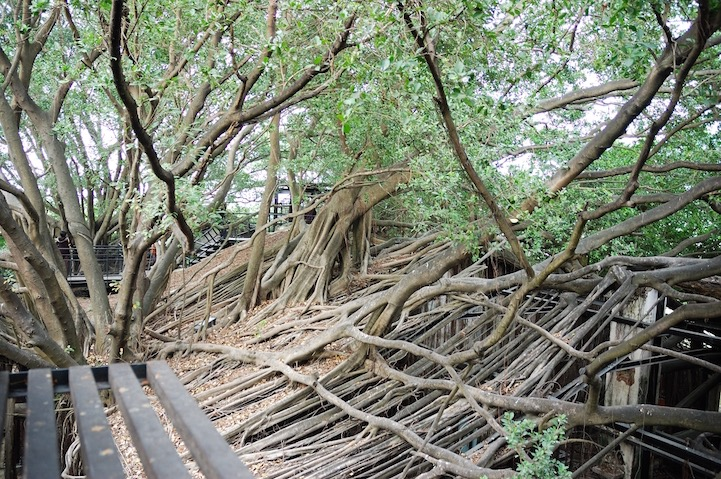 เมื่อธรรมชาติทวงคืนพื้นที่..คือการทำลายหรืองานสร้างสรรค์ 22 - abandon building