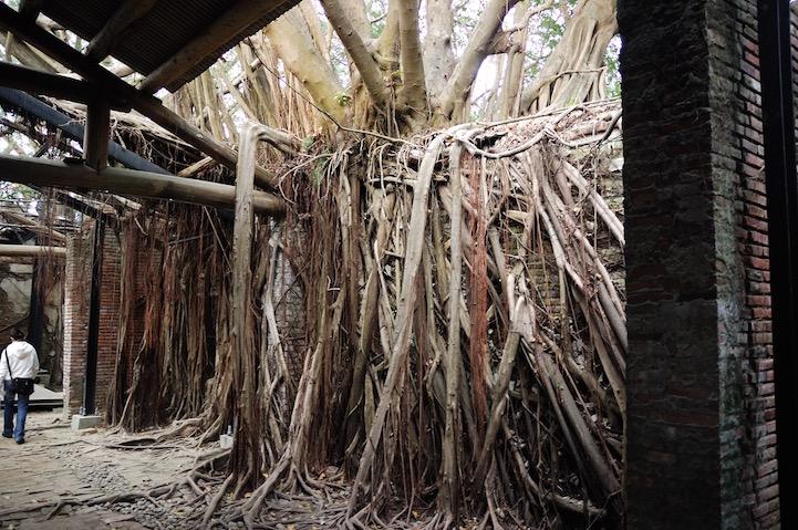 เมื่อธรรมชาติทวงคืนพื้นที่..คือการทำลายหรืองานสร้างสรรค์ 24 - abandon building
