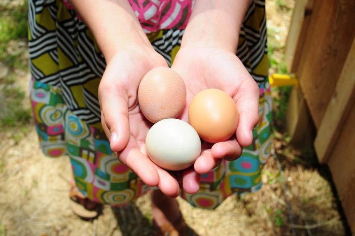 """ปล่อยไก่อุดมชัยฟาร์ม ปล่อยให้ """"ไก่"""" และ""""คน"""" มีความสุขไปพร้อมกัน 13 - egg"""
