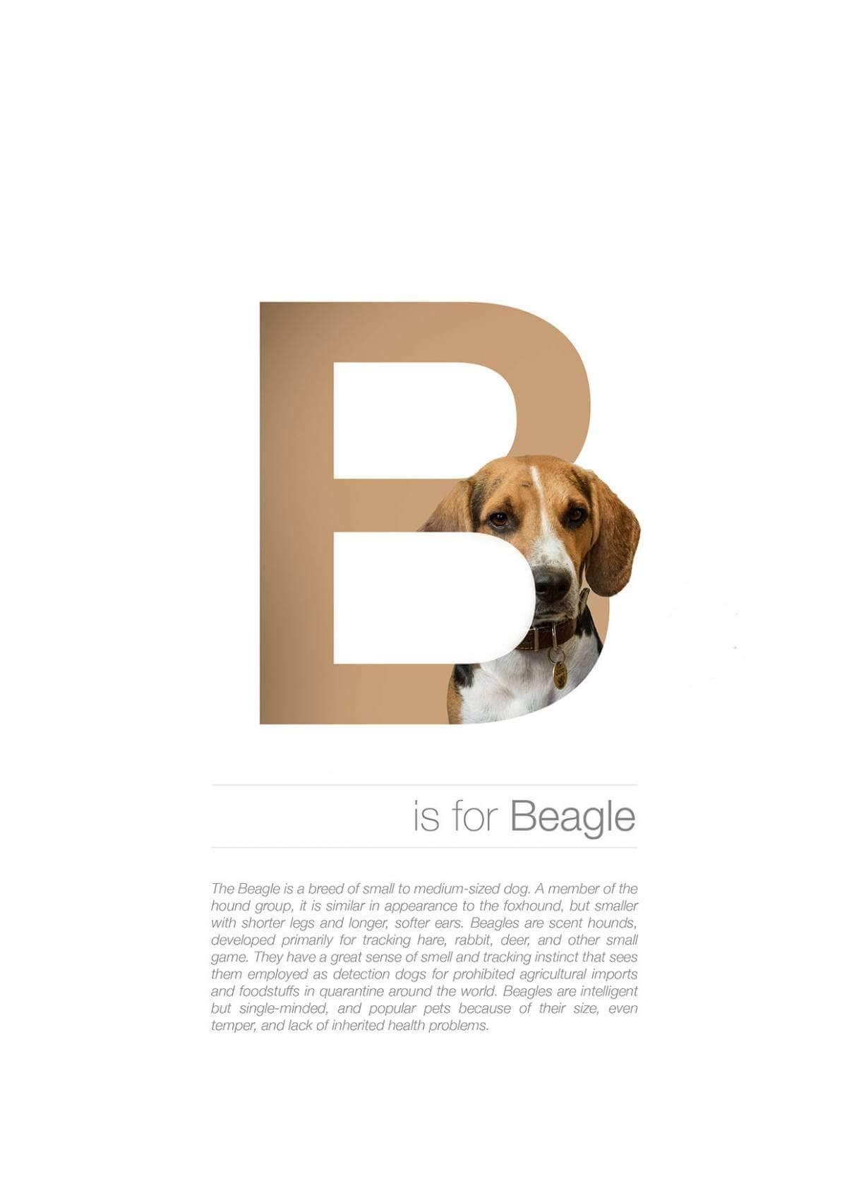 B ตัวอักษรกราฟฟิค A Z สายพันธุ์หมาไอเดียน่ารักจากดีไซน์เนอร์โรมาเนีย